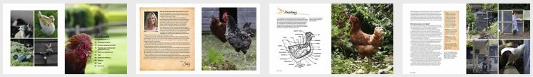 chickens book preview