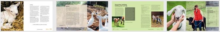 Suzie Baldwin's Smallholder's Handbook