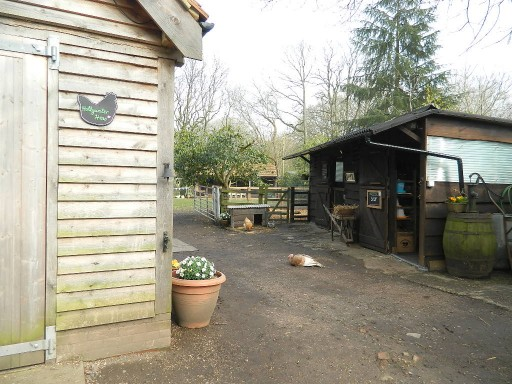 Hollywater Hens shop