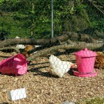 pink chicken feeders