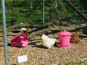 pink feeders 2