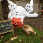 Halloween at Hollywater Hens