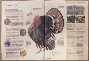 Poultry expert Suzie Baldwin writes in BBC Countryfile magazine